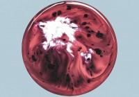 Milky Chance: Blossom – Album Review