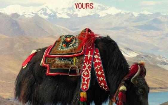 Beatsteaks: Yours – Album Review
